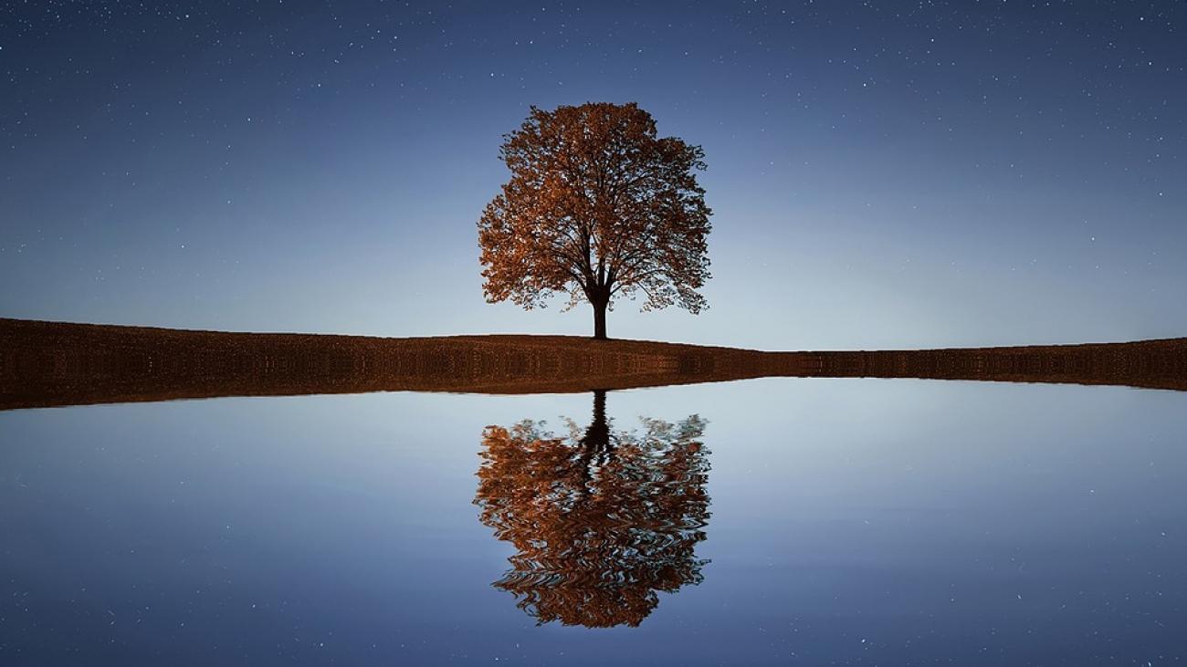 tree-838667_1280-1